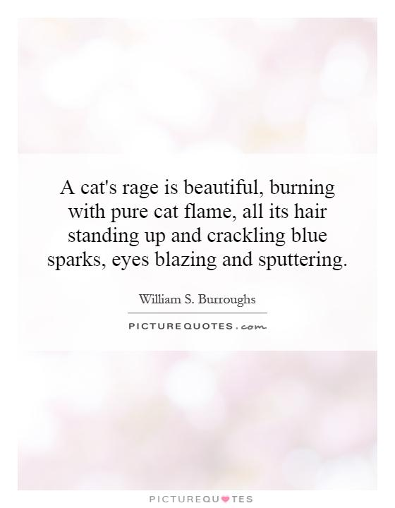 A cat's rage is beautiful, burning with pure cat flame, all its hair standing up and crackling blue sparks, eyes blazing and sputtering Picture Quote #1