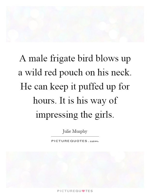 A male frigate bird blows up a wild red pouch on his neck. He can keep it puffed up for hours. It is his way of impressing the girls Picture Quote #1