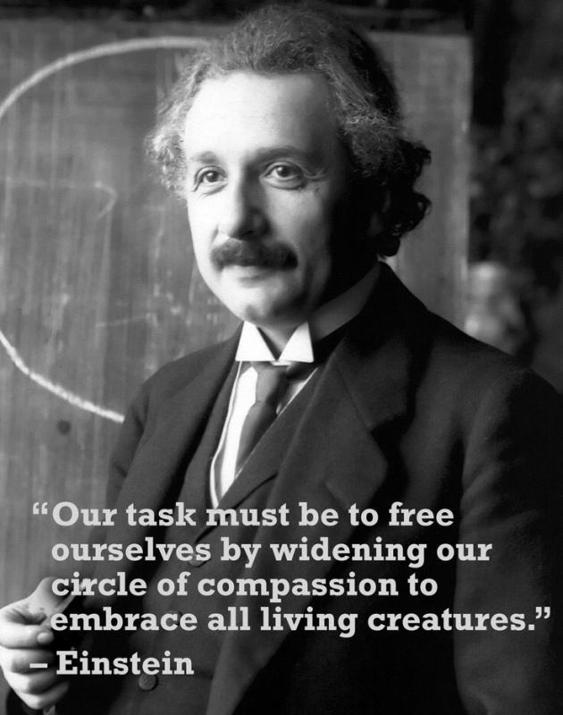 Our task must be to free ourselves by widening our circle of compassion to embrace all living creatures and the whole of nature and its beauty Picture Quote #1