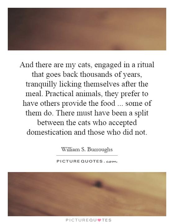 And there are my cats, engaged in a ritual that goes back thousands of years, tranquilly licking themselves after the meal. Practical animals, they prefer to have others provide the food... some of them do. There must have been a split between the cats who accepted domestication and those who did not Picture Quote #1