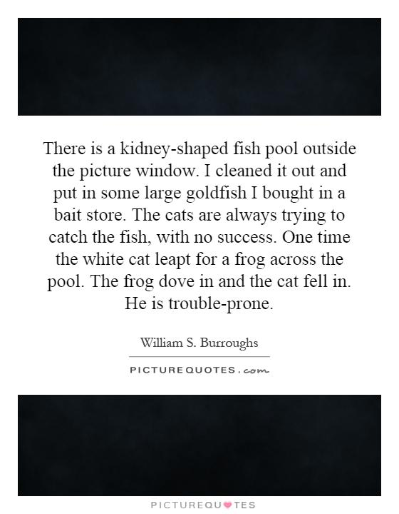 There is a kidney-shaped fish pool outside the picture window. I cleaned it out and put in some large goldfish I bought in a bait store. The cats are always trying to catch the fish, with no success. One time the white cat leapt for a frog across the pool. The frog dove in and the cat fell in. He is trouble-prone Picture Quote #1