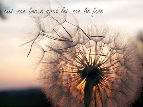 Cut me loose and let me be free Picture Quote #1