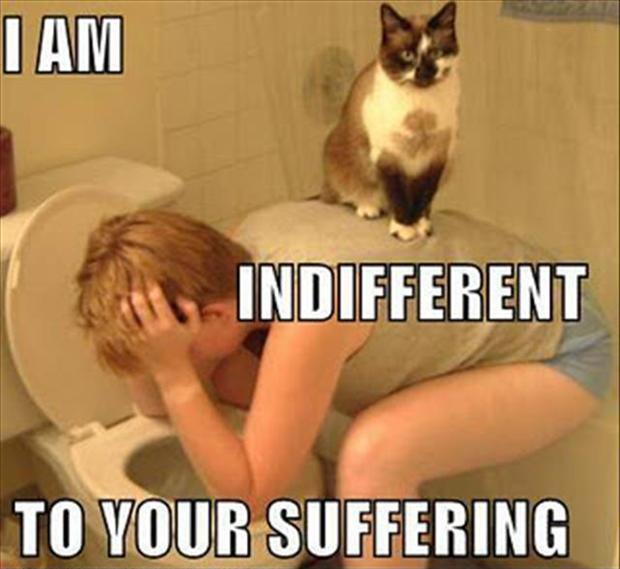 I am indifferent to your suffering Picture Quote #1