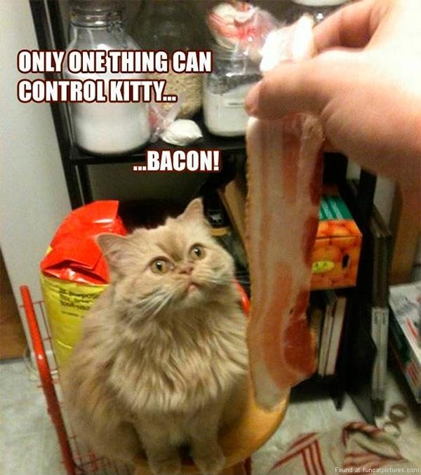 Only one thing can control kitty. Bacon! Picture Quote #1