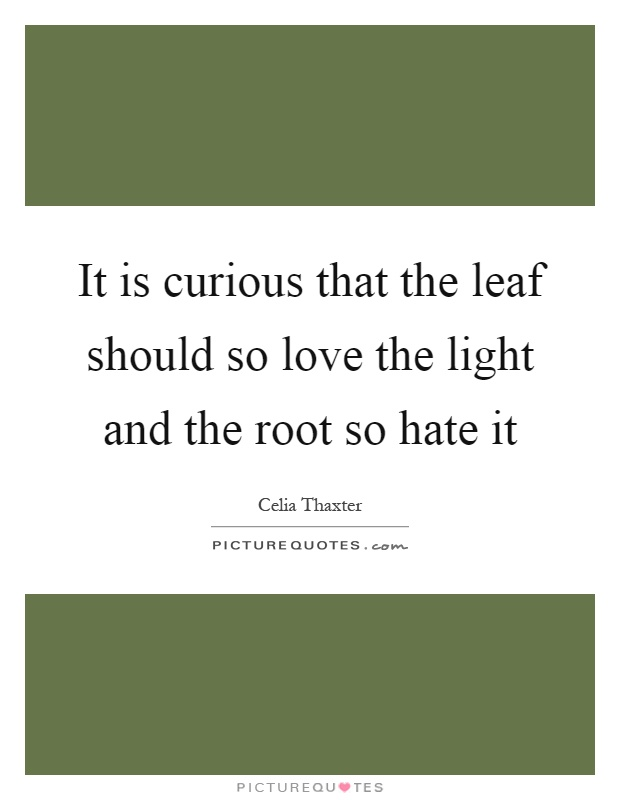 It is curious that the leaf should so love the light and the root so hate it Picture Quote #1