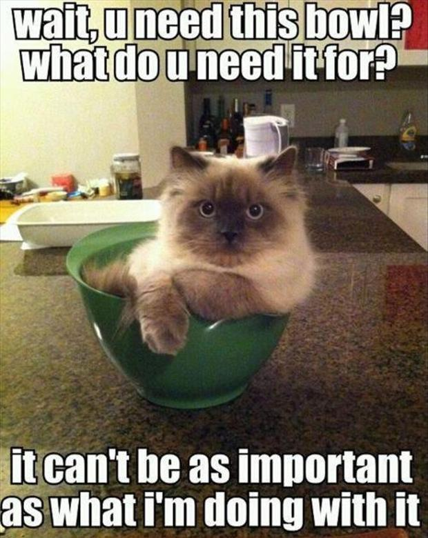 Wait, u need this bowl? What do u need it for? It can't be as important as what I'm doing with it Picture Quote #1