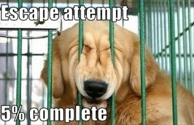 Escape attempt 5% complete Picture Quote #1
