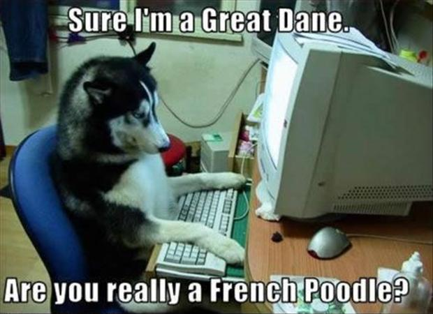 Sure I'm a Great Dane. Are you really a French Poodle? Picture Quote #1
