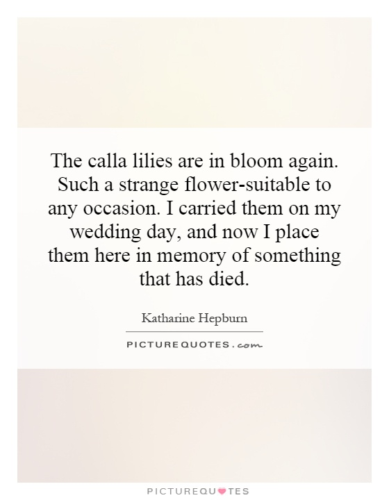 The calla lilies are in bloom again. Such a strange flower-suitable to any occasion. I carried them on my wedding day, and now I place them here in memory of something that has died Picture Quote #1