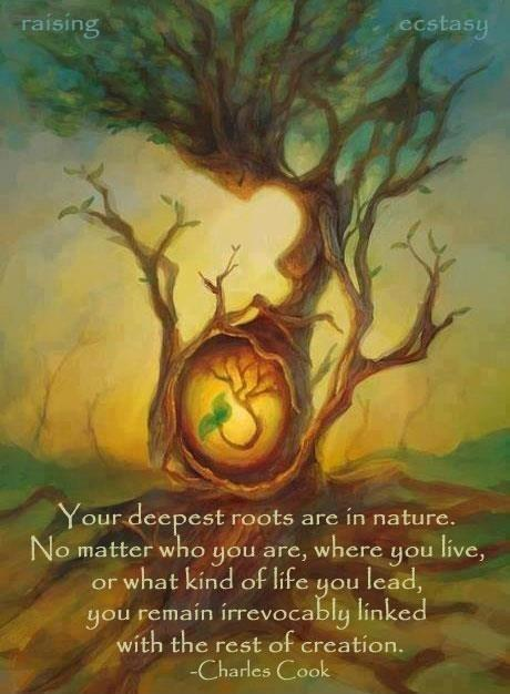 You deepest roots are in nature. No matter who you are, where you live, or what kind of life you lead, you remain irrevocably linked with the rest of creation Picture Quote #1
