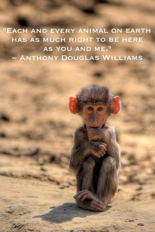 Each and every animal on Earth has as much right to be here as you and me Picture Quote #1