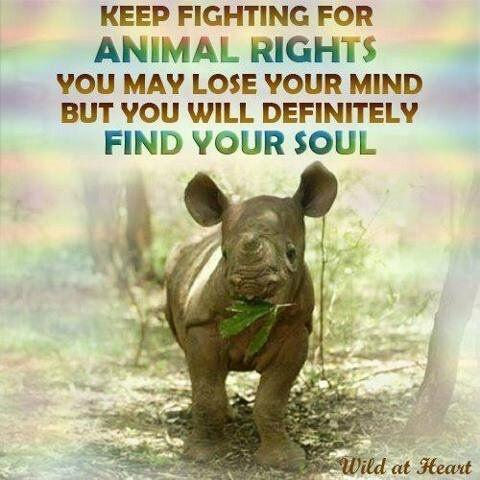 Keep fighting for animal rights. You may lose your mind but you will definitely find your soul Picture Quote #1