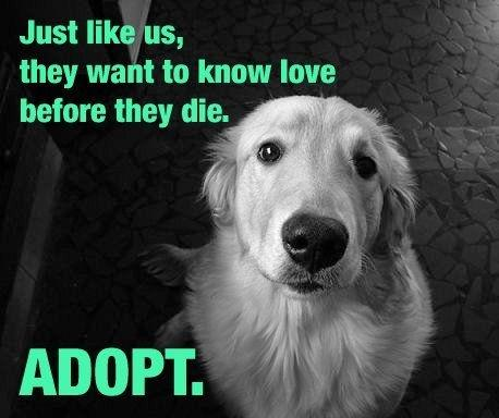 Just like us they want to know love before they die. Adopt Picture Quote #1