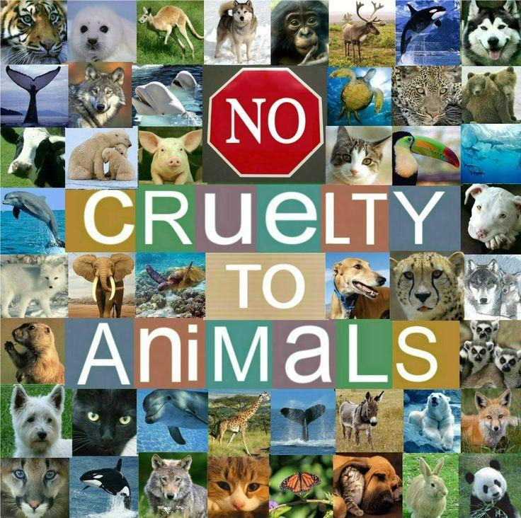 No cruelty to animals Picture Quote #1