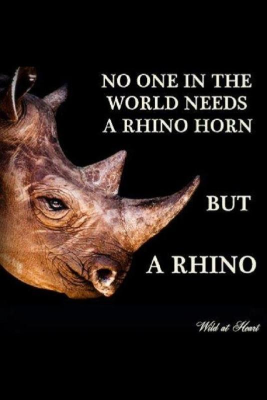 No one in the world need a rhino horn, but a rhino Picture Quote #1