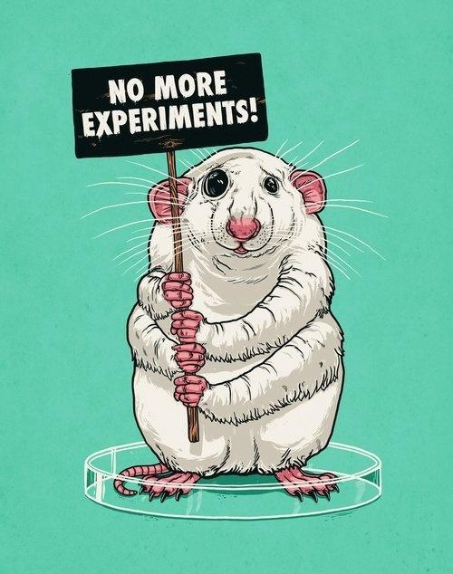No more experiments! Picture Quote #1