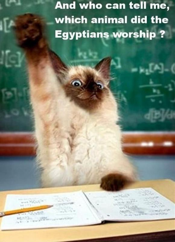 And who can tell me, which animal did the Egyptians worship? Picture Quote #1