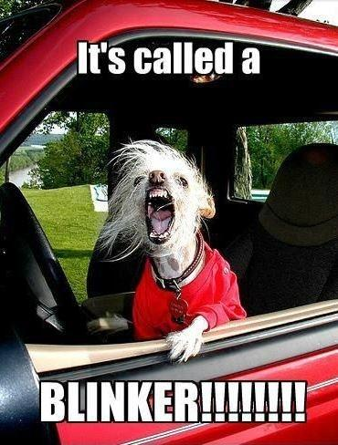 It's called a blinker Picture Quote #1