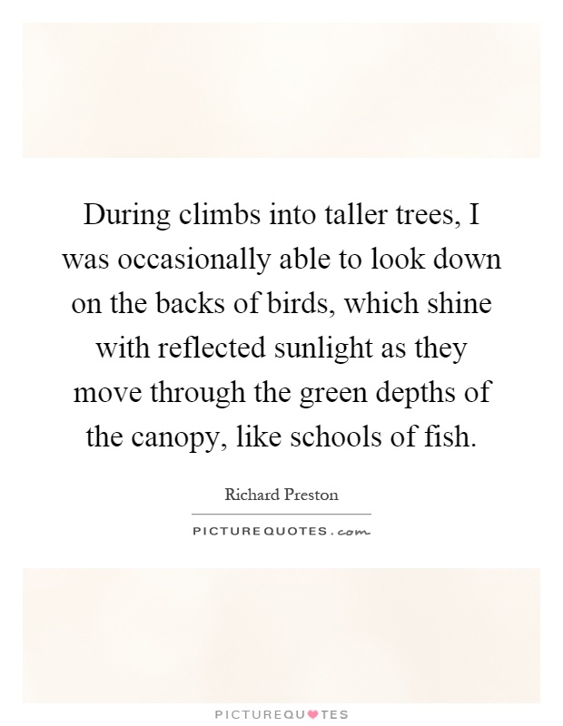 During climbs into taller trees, I was occasionally able to look down on the backs of birds, which shine with reflected sunlight as they move through the green depths of the canopy, like schools of fish Picture Quote #1