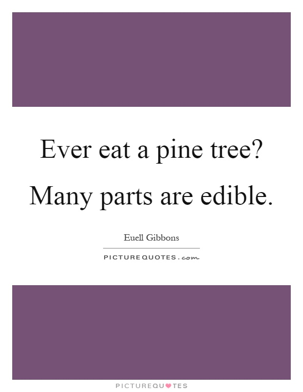 Ever eat a pine tree? Many parts are edible Picture Quote #1