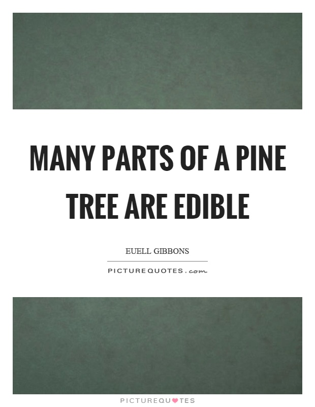 Many parts of a pine tree are edible Picture Quote #1
