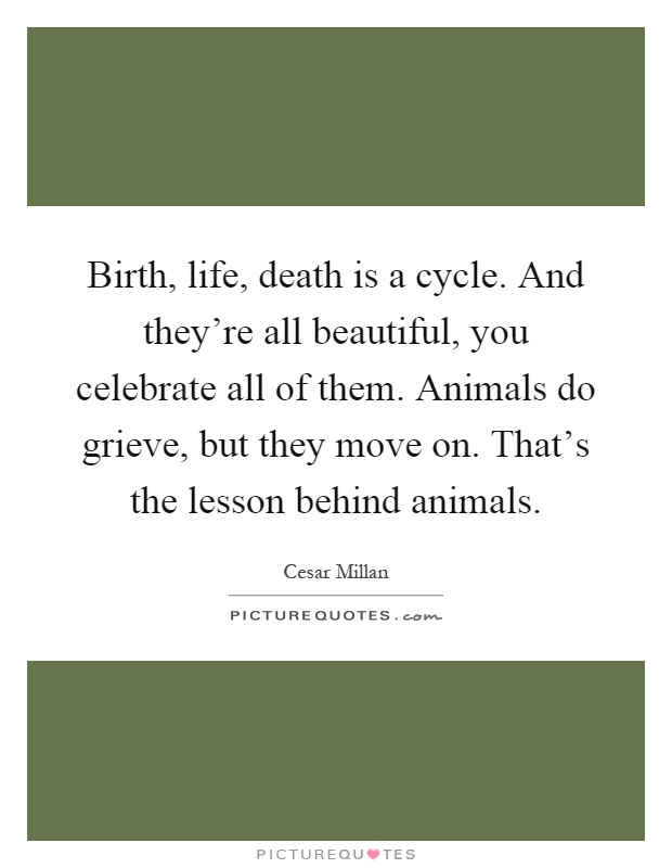 Birth, life, death is a cycle. And they're all beautiful, you celebrate all of them. Animals do grieve, but they move on. That's the lesson behind animals Picture Quote #1