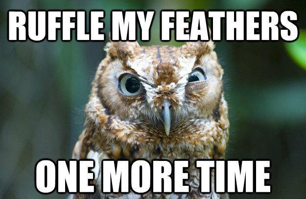 Ruffle my feathers one more time Picture Quote #1