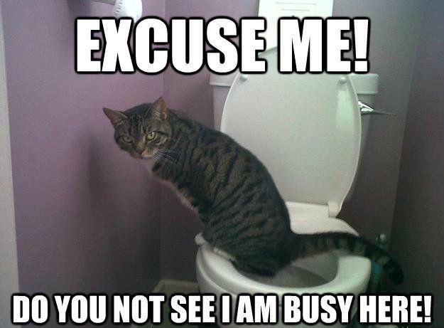 Excuse me! Do you not see I am busy here! Picture Quote #1