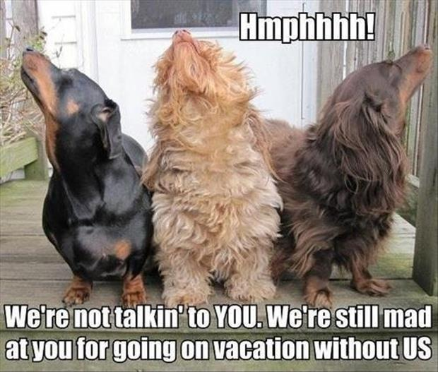 Hmphhhh! We're not talkin' to YOU. We're still mad at you for going on vacation without US Picture Quote #1