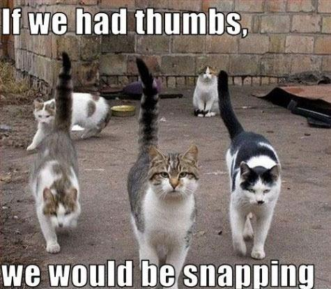 If we had thumbs, we would be snapping Picture Quote #1