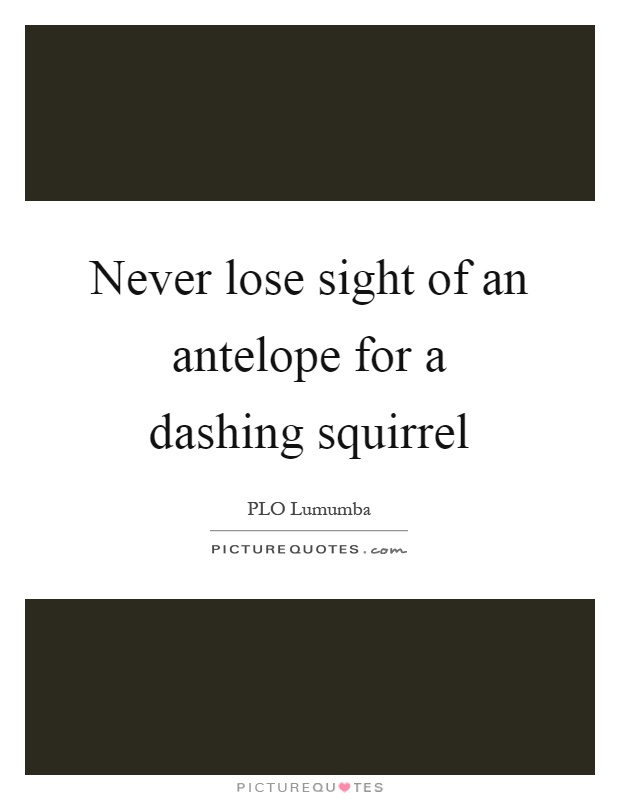Never lose sight of an antelope for a dashing squirrel Picture Quote #1