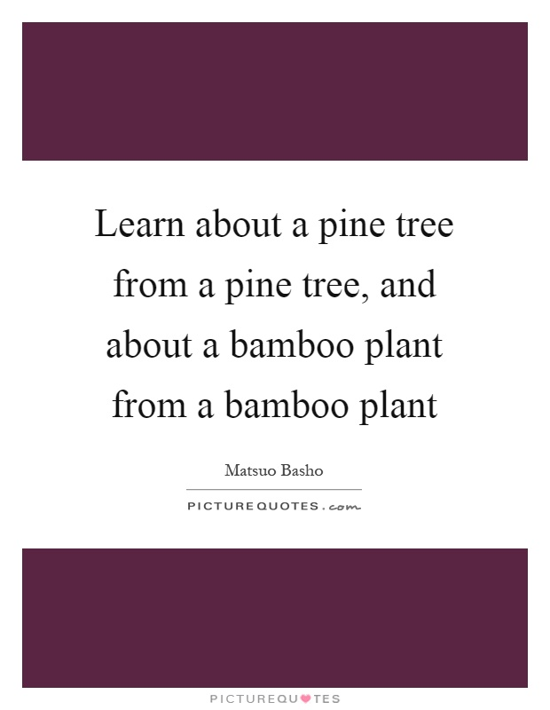 Learn about a pine tree from a pine tree, and about a bamboo plant from a bamboo plant Picture Quote #1