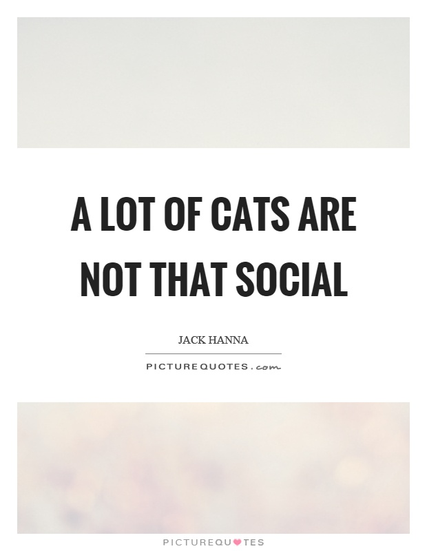 A lot of cats are not that social Picture Quote #1