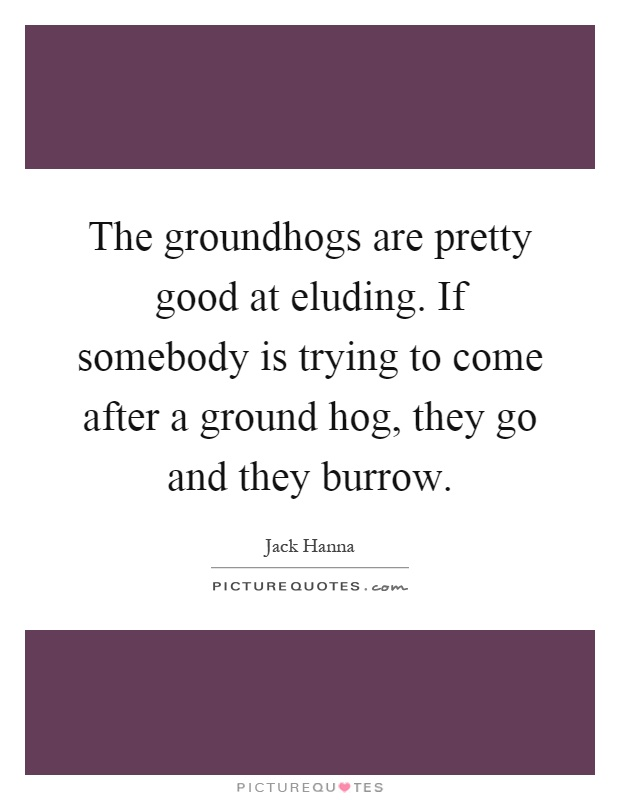 The groundhogs are pretty good at eluding. If somebody is trying to come after a ground hog, they go and they burrow Picture Quote #1
