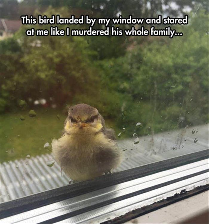 This bird landed by my window and stared at me like I murdered his whole family Picture Quote #1