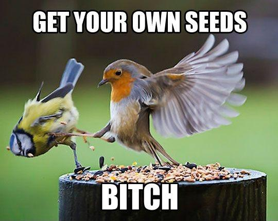 Get your own seeds bitch Picture Quote #1
