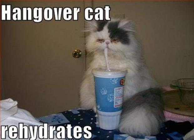 Hangover cat rehydrates Picture Quote #1