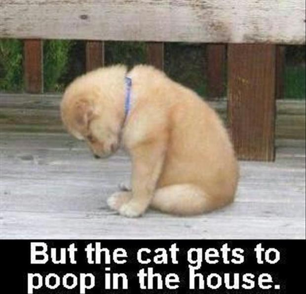 But the cat gets to poop in the house Picture Quote #1