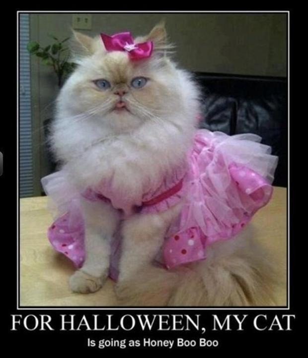 For Halloween, my cat is going as Honey Boo Boo Picture Quote #1