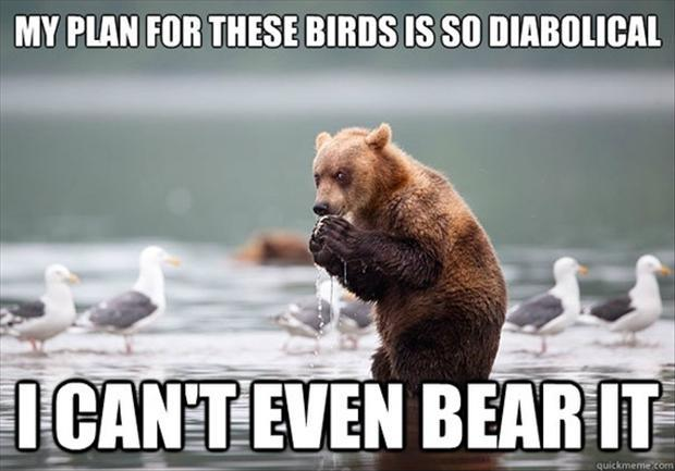 My plan for these birds is so diabolical I can't even bear it Picture Quote #1