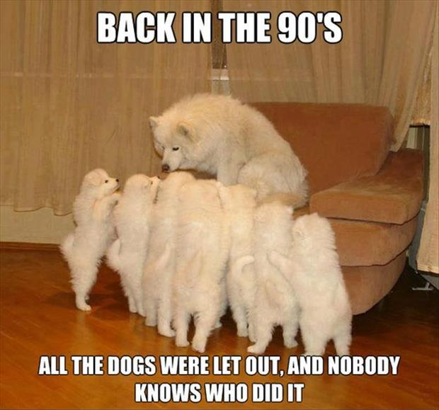 Back in the 90's all the dogs were let out and nobody knows who did it Picture Quote #1