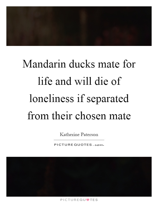 Mandarin ducks mate for life and will die of loneliness if separated from their chosen mate Picture Quote #1