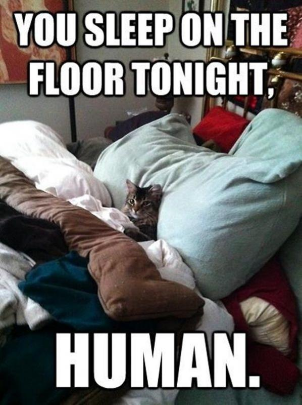 You sleep on the floor tonight human Picture Quote #1
