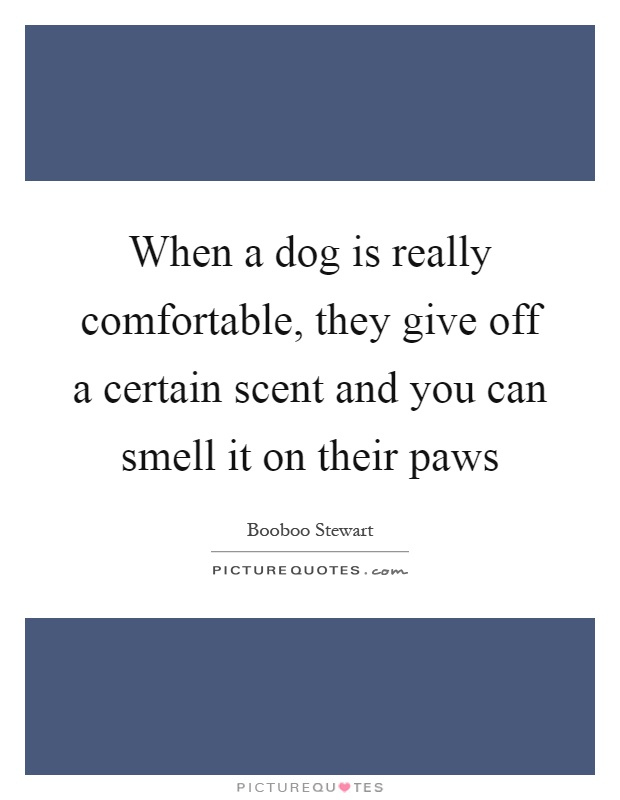 When a dog is really comfortable, they give off a certain scent and you can smell it on their paws Picture Quote #1