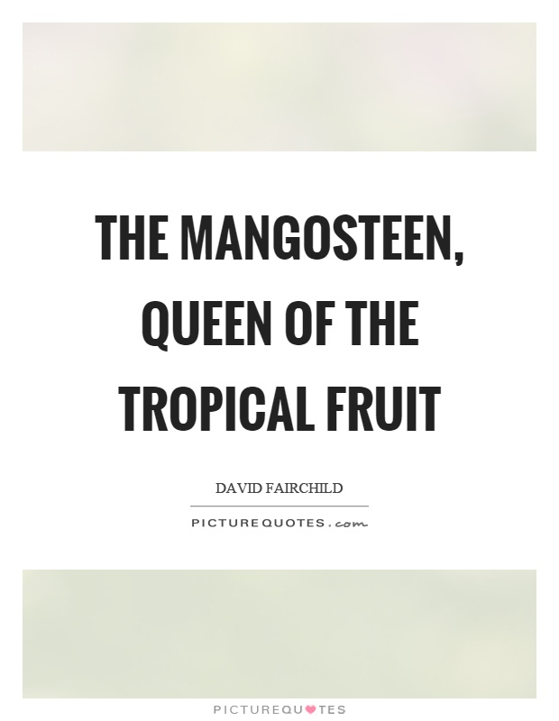 The mangosteen, queen of the tropical fruit Picture Quote #1