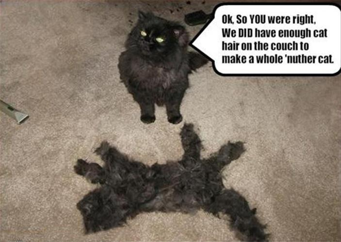 Ok, so YOU were right, we DID have enough cat hair on the couch to make a whole 'nuther cat Picture Quote #1