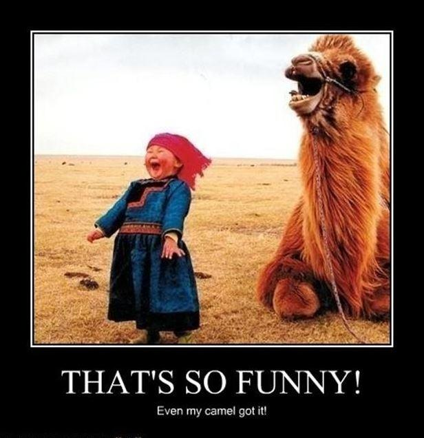 That's so funny! Even my camel got it! Picture Quote #1