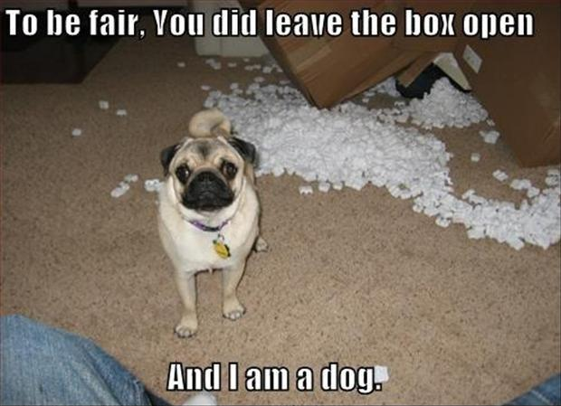 To be fair. You did leave the box open. And I am a dog Picture Quote #1