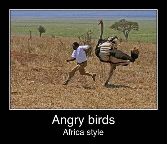Angry birds. Africa style Picture Quote #1