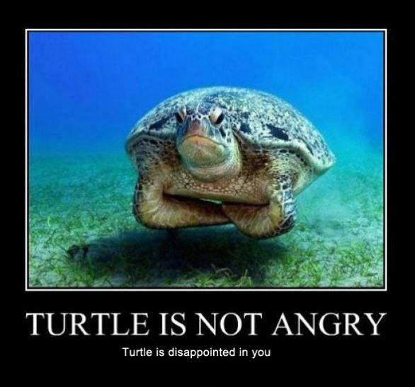 Turtle is not angry. Turtle is disappointed in you Picture Quote #1